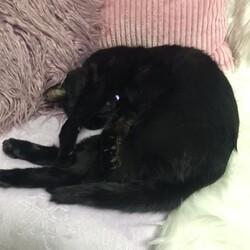 黒猫さん 備忘録8