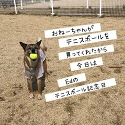 今日はEdのテニスボール記念日