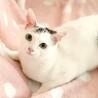 人も先住猫も大好きな甘えん坊の女の子。