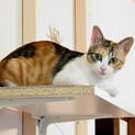 美猫です!三毛猫のミケちゃん