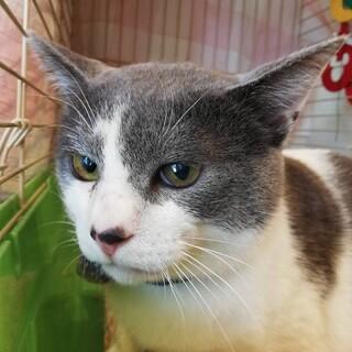 THE 日本男児(猫)!文太です!!