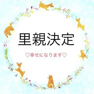 柴犬♀マユカ