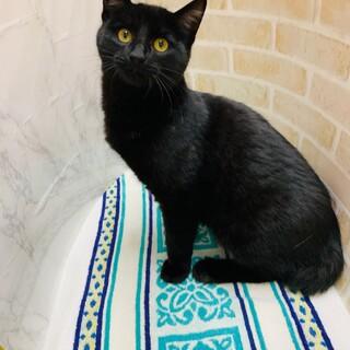 もふもふ黒猫のビータ君