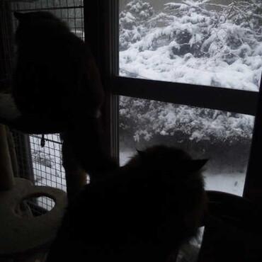 雪かき道具を片付けようと思ったら今朝はまた白い世界に逆戻り!