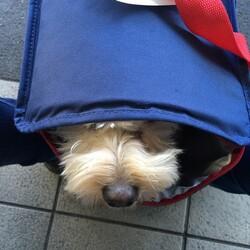 ピットブルから隠れてるMIX犬 草