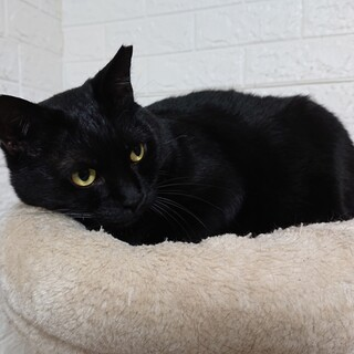 ♥ムードメーカーな可愛い黒猫♥