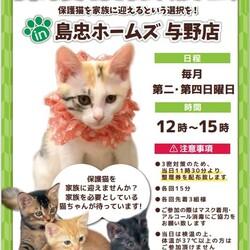 保護猫譲渡会 in 島忠ホームズ与野店