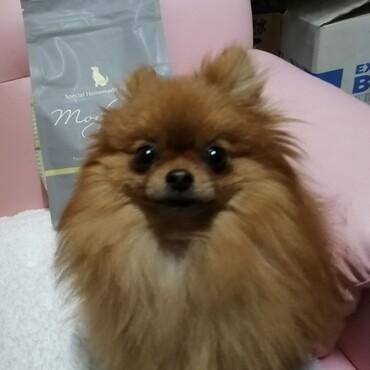 きーちゃんの写真