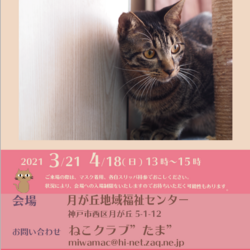保護猫の里親会