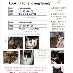 保護猫譲渡会☆ダンススタジオ千葉4・4
