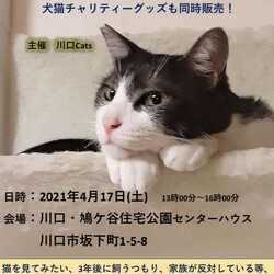 川口 鳩ヶ谷住宅公園 ほごねこ譲渡会 サムネイル1