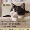 川口 鳩ヶ谷住宅公園 ほごねこ譲渡会