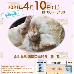 猫の譲渡会in宝塚