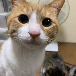 愛猫が8歳で肥大型心筋症で亡くなりました。