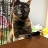 美猫のサビちゃん☆茶美ちゃん