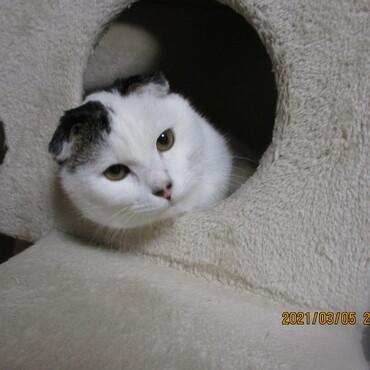 先住猫がよく入っていた場所を今はこの子が占領してます。