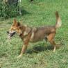 健康状態は良好の人なつこい老犬 サムネイル2