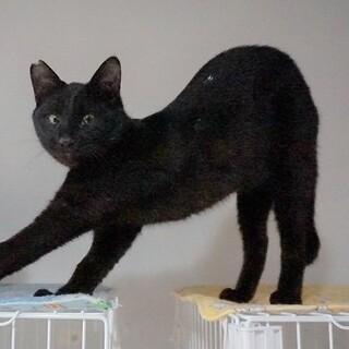 黒猫の男の子☆生後8か月