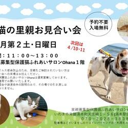 犬と猫の里親お見合い会