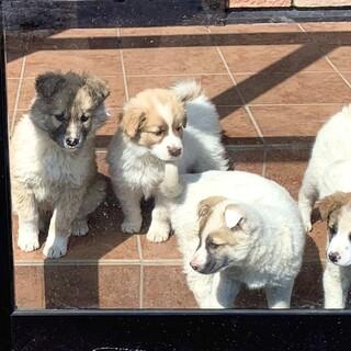 【里親決定】約2ヶ月の子犬♀ 中型犬