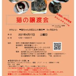 猫の譲渡会 by多頭飼育現場からレスキュー+α