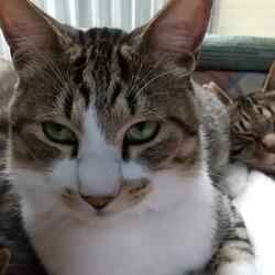 猫の譲渡会 by多頭飼育現場からレスキュー+α サムネイル3