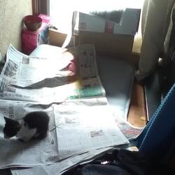 新聞が読めません!里親6日目