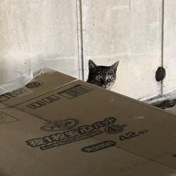 野良猫を取り巻く環境