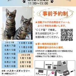 第109回保護猫たちの幸せ探し会