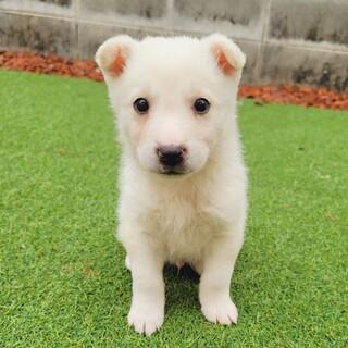 募集停止☆フワフワ可愛い子犬『クレマくん』☆