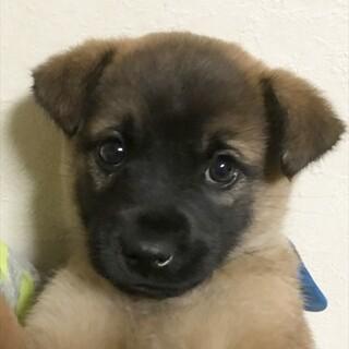 保護犬ナンバーD1494 中型犬子犬