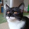 明るくて楽しいメス猫です