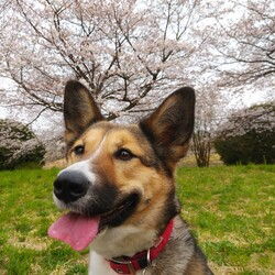 琳ちゃんと桜