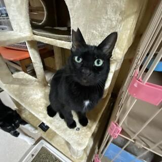なでなで大好き♪甘えん坊の黒猫さん。