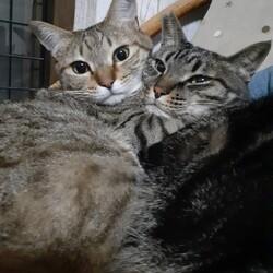 ※開催中止【相模大野駅前北口デッキ】♪猫の譲渡会♪ サムネイル3