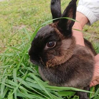 ミニウサギの立夏(りっか)ちゃん