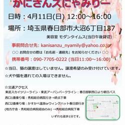 かにさんズにゃみりー☆猫の譲渡会in春日部 サムネイル2