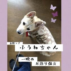 「倉敷っ子ふうねちゃん、お泊り保育中→譲渡決定!」サムネイル1