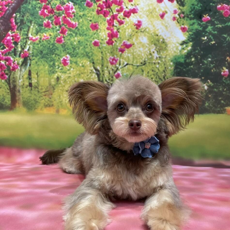 ミッキーのカバー写真