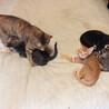 猫の親子を預かってください