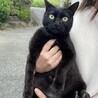 エイズ陽性成猫の里親募集について