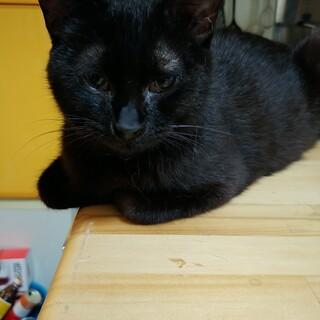 甘えん坊の黒猫妊婦ちゃん