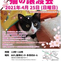 明石【譲渡会】猫まみれwithあかしっぽ 第1回