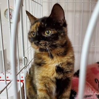家猫修行中!魅力的なサビ猫のおこげちゃん(仮名)