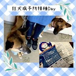 狂犬病予防接種Day