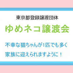 ★ゆめネコ譲渡会★日本橋三越 歩5分 サムネイル3