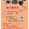 4/17 譲渡会参加 はちわれ女子 7ヶ月位 サムネイル6
