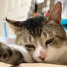 そばかす猫さん★ターボ サムネイル3