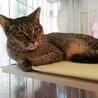 おしとやかなむぎわら猫「ブギー」 サムネイル2
