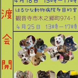 保護犬猫の譲渡会